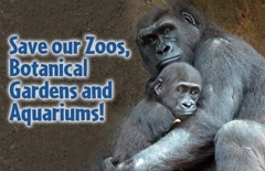 save-our-zoos